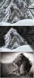 Snowlion